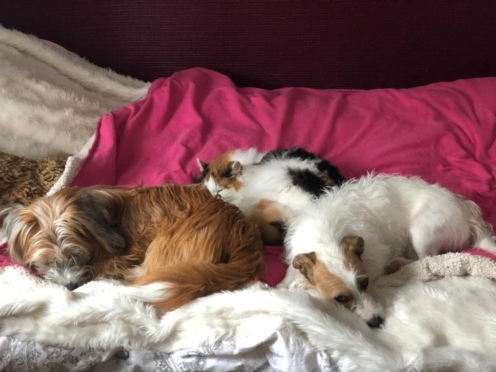 Hund & Katt det gårINTE